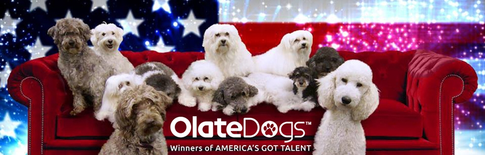 Image of OLATE DOGS